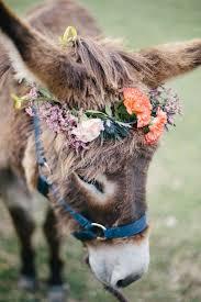 25 baby donkey ideas mini donkey donkeys