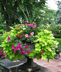 Container Flower Gardening Ideas Design Of Flower Planter Ideas For Patio Building A House