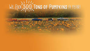 Pumpkin Picking Places In South Jersey by Shaw Farms In Milford Ohio