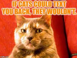 Cat Meme Maker - suspicious cat meme generator imgflip