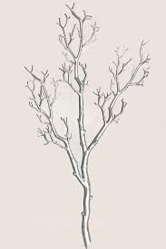 this awesome bendable manzanita branch is really and