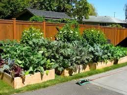 Backyard Vegetable Garden Ideas Design Of Backyard Vegetable Garden Ideas 40 Vegetable Garden