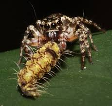 examples of mutalism commensalism parasitism and predator and