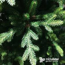 kaemingk everlands kingswood fir tree 300cm 10ft mid