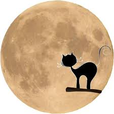 black cat silhouette in front of the moon png image