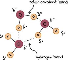 hydrogen bonding in water video khan academy
