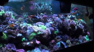 Reef Aquarium Lighting Part 3 Reef Tank Lighting Reefkeeping Podcast By