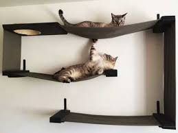 unconventional cat furniture for feline instincts catastrophic