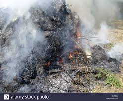 Wildfire Weed by Smoky Garden Bonfire Fire Flame Flames Flaming Fire Burn Burns
