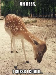 Oh Deer Meme - oh deer i guess i could o m g deer make a meme