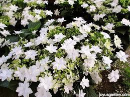 13 blooming plants