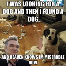 Looking Meme - hispanic meme morrissey looking for a dog