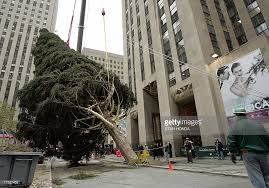 workers set up christmas tree in nyc u0027s rockefeller center photos
