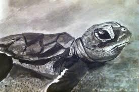sea turtle ink wash sketch by munjey86 on deviantart