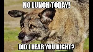 Funny Dogs Memes - 10 funny dog memes 2018 youtube