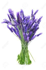 lavender bouquet a bunch of lavender on a white background stock photo picture and