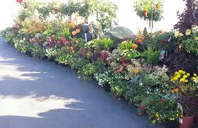 california native plants landscaping san jose nursery u0026 gardening payless nursery