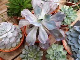 great big greenhouse succulent houseplants