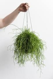 d e s i g n l o v e f e s t diy hanging planter