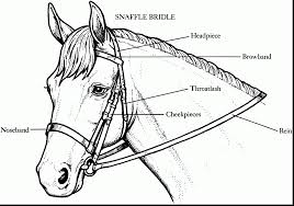 fabulous horse bridle coloring pages free horse coloring