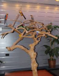 java tree playstands for birds free shipping discounted