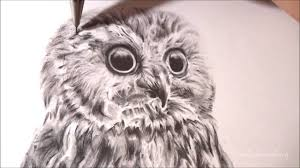 realistic owl speed drawing time lapse youtube