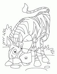 zebra coloring pages print coloring