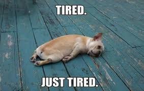Good Nite Memes - sweet good night quotes good night images good night memes