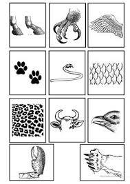 19 free esl animal flashcards worksheets