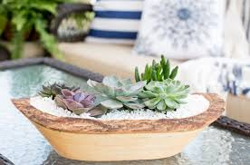 5 foolproof ways to keep succulents alive