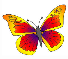 items that are the color yellow phoebis trite yellow butterfly