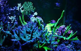 best lighting for corals led aquarium moonlight night view orphek