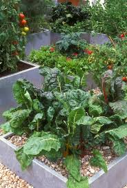 container vegetable garden plant u0026 flower stock photography