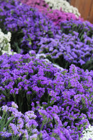 Purple Paint Law by Rebecca Louise Law Rebeccallaw Twitter