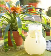 Tropical Potted Plants Outdoor - tropical flowers for your patio