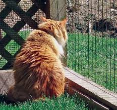 Keep Cats In Backyard Outdoor Enclosures For Cats Paws