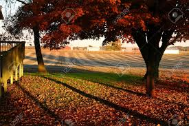 a tree in the beginning of fall in a country setting surrounded