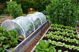 raised bed vegetable garden covers home outdoor decoration