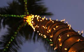 sky light trees palm tree holidays lights wallpaper iphone