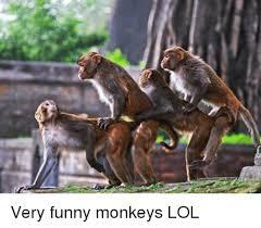 Funny Monkey Meme - funny monkeys pics wallpapergenk