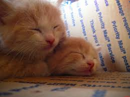 my new twin kittens cute cats hq free pictures of funny cats