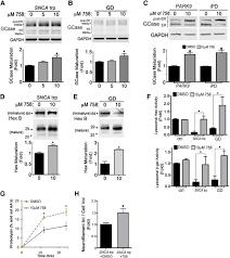 activation of β glucocerebrosidase reduces pathological α