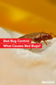 Bed Bug Exterminator Detroit 12 Best How To Beat Bed Bugs Images On Pinterest Bed Bug Control