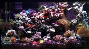 best lighting for corals 10 gallon saltwater aquarium the best nano setup youtube