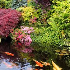 How To Build A Fish Pond In Your Backyard How To Build A Pond Or Water Garden In Your Yard