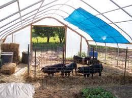 Backyard Greenhouse Winter Expert Advice On Greenhouse Growing Organic Gardening Mother