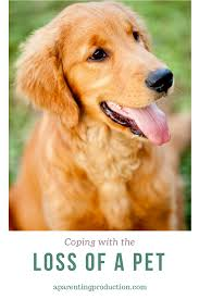 coping with loss of pet coping with the loss of a pet