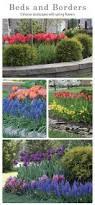 best 20 garden shrubs ideas on pinterest potted plants shrubs