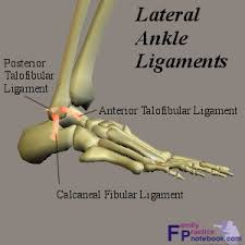 Posterior Inferior Tibiofibular Ligament Ankle Anatomy