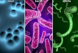Bacterial Diseases Of Plants - bacterial infections 101 types symptoms and treatments